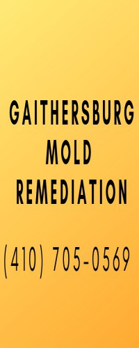 Gaithersburg Mold Remediation
