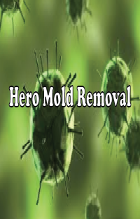 Hero Mold Removal - VA Beach