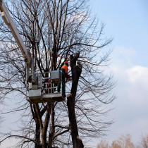 NORTH RICHLAND HILLS TREE SERVICE